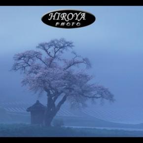 掘内カラー賞「霧雨に咲く」