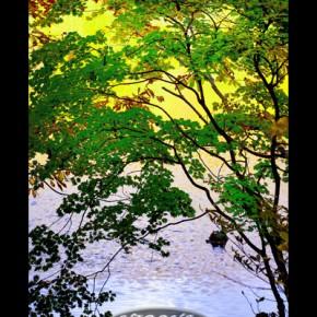 福島トヨタ自動車㈱プリウス賞「水面の彩り」