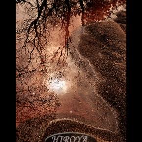 「渚の樹影」福島県写真連盟特別賞