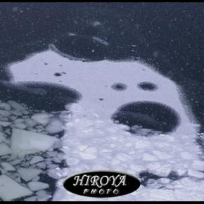 パナソニック ルミックス賞「氷の造形」