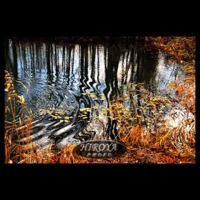秋の湖面1