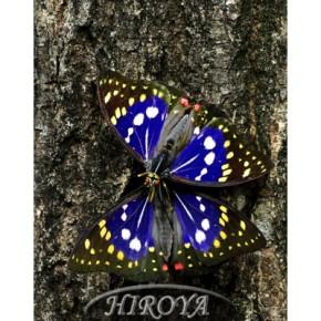 おやま写真賞「蝶の二重奏」